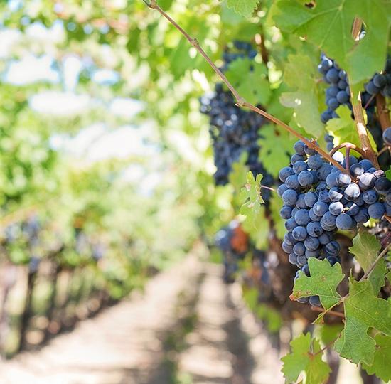 Жандармерия ще пази реколтата eдин месец